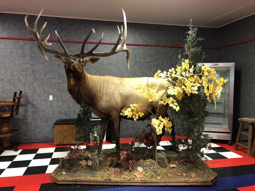 TIMED ONLINE AUCTION TAXIDERMY, FIREARMS, FURNITURE, SHOP EQUIPMENT   Auction