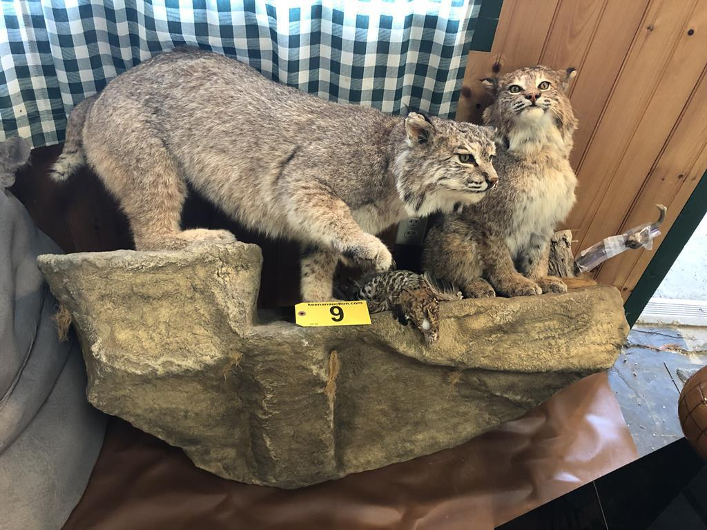 TIMED ONLINE AUCTION TAXIDERMY, FIREARMS, AMMO, HUNTING SUPPLIES, ETC  Auction