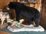 TIMED ONLINE AUCTION TAXIDERMY, FIREARMS, FURNITURE, SHOP EQUIPMENT   Auction Photo