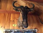 TIMED ONLINE AUCTION TAXIDERMY - ANTIQUES - COLLECTIBLES  Auction Photo