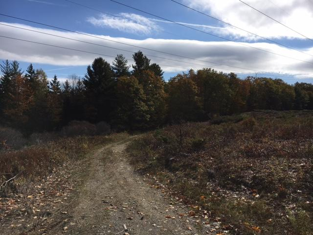 313+/- Acres - (11) Parcels - Orrington, Maine Auction