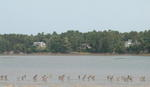 MAINE OCEANFRONT - Classic Maine Saltwater Farm Auction Photo