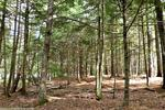 4.12+/- Acre Waterfront Parcel, Lot#5 Peaceful Point Rd., Waltham, Maine Auction Photo